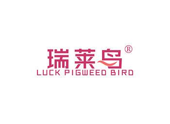 瑞莱鸟,LUCK PIGWEED BIRD