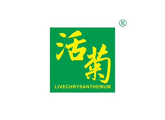 活菊 LIVECHRYSANTHEMUM