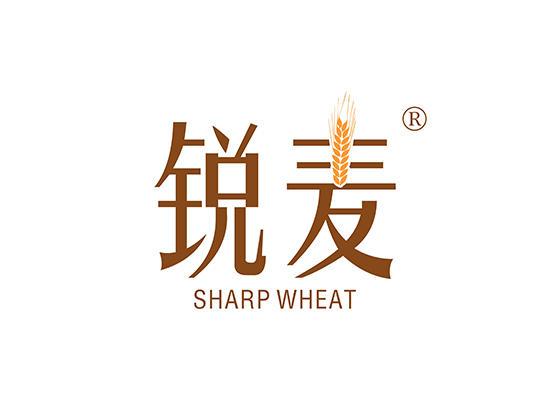 32-A736 锐麦 SHARP WHEAT