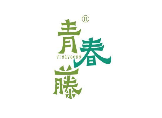 41-B1032 青春藤 VINEYOUNG